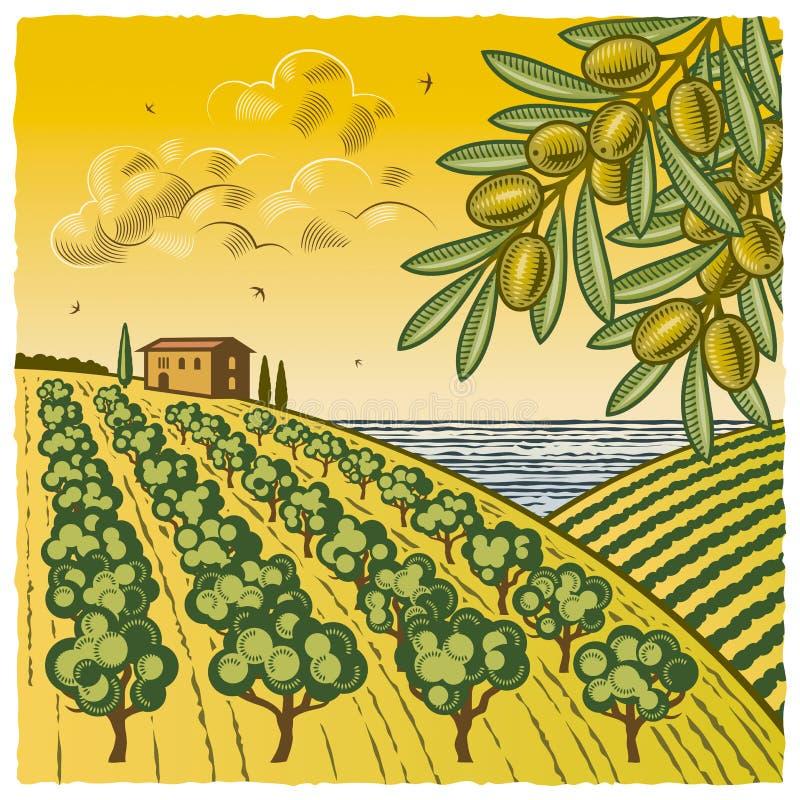 Horizontal avec la plantation olive illustration de vecteur