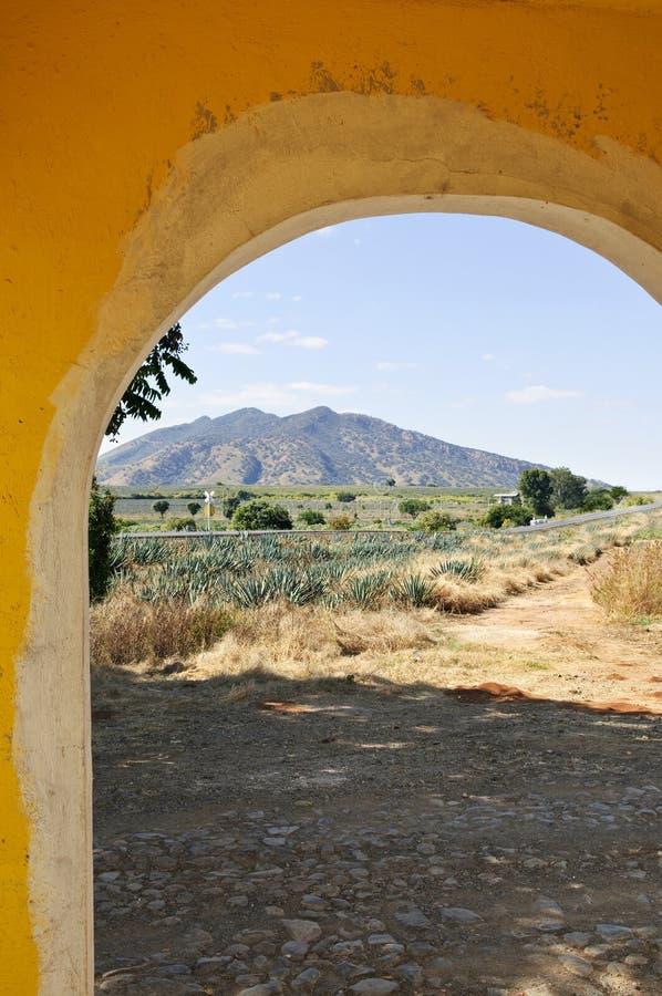 Horizontal avec le gisement de cactus d'agave au Mexique photographie stock