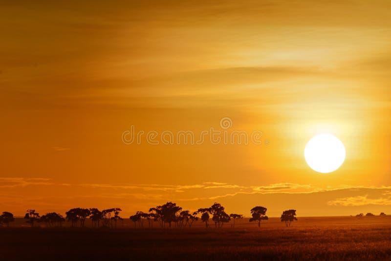 Horizontal avec le lever de soleil sur la savane images libres de droits