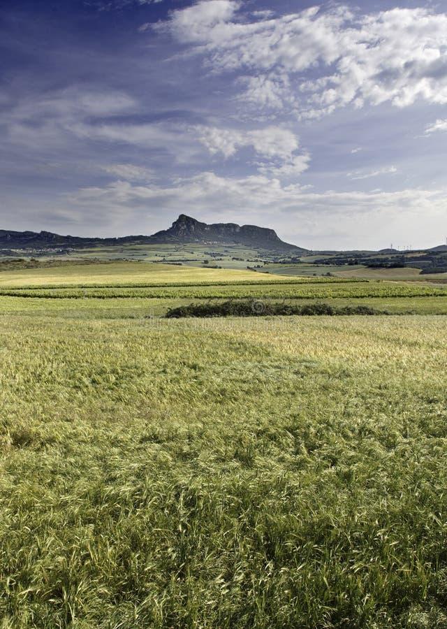 Horizontal avec les montagnes et le blé de nuages photographie stock libre de droits