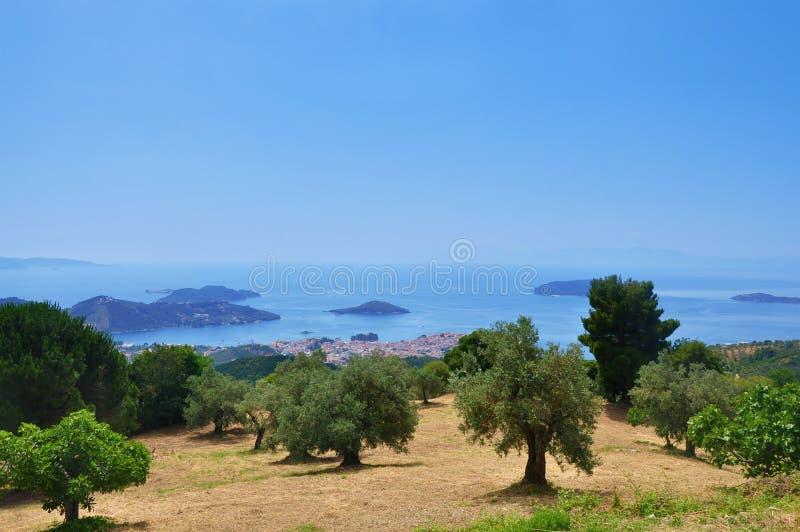 Horizontal avec les oliviers images libres de droits