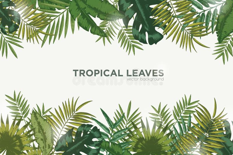 Horizontal background with green leaves of tropical palm tree, banana and monstera. Elegant backdrop decorated with royalty free illustration