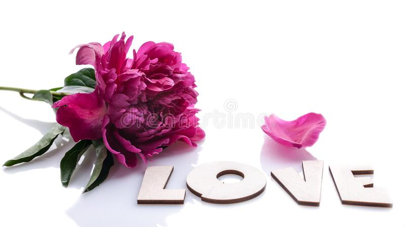 Horizontal banner: big peony and word LOVE isolated on white background. Romantic composition stock images