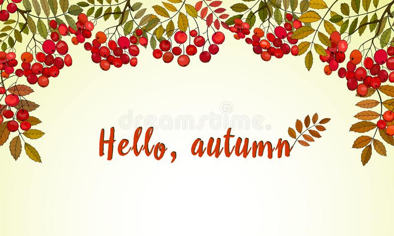 Horizontal banner with bunches of red rowan and autumn rowan leaves royalty free illustration