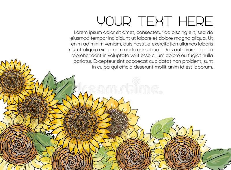 Horizontal banner with yellow sunflowers hand drawn in sketch style on white background. Natural vintage greeting card with place royalty free illustration