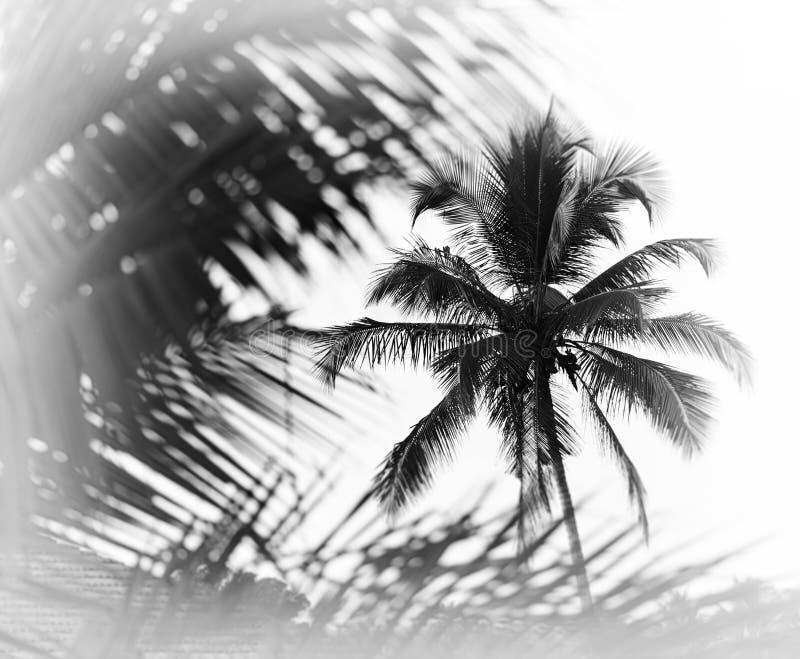 Horizontal black and white indian palm tree memories vignette bo stock photos
