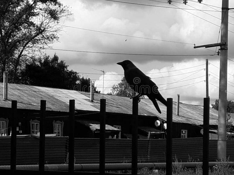 Horizontal black and white photo in backlight - a bird sits on a fence. Silhouette. Symbols and signs. Bird to the news. Bad news royalty free stock photography