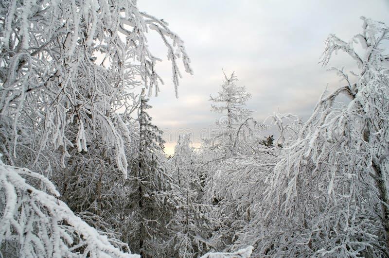 Horizontal blanc féerique de neige photo libre de droits