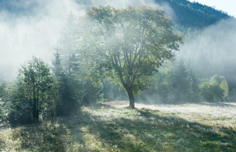 Horizontal brumeux de montagne d'automne de matin photos libres de droits