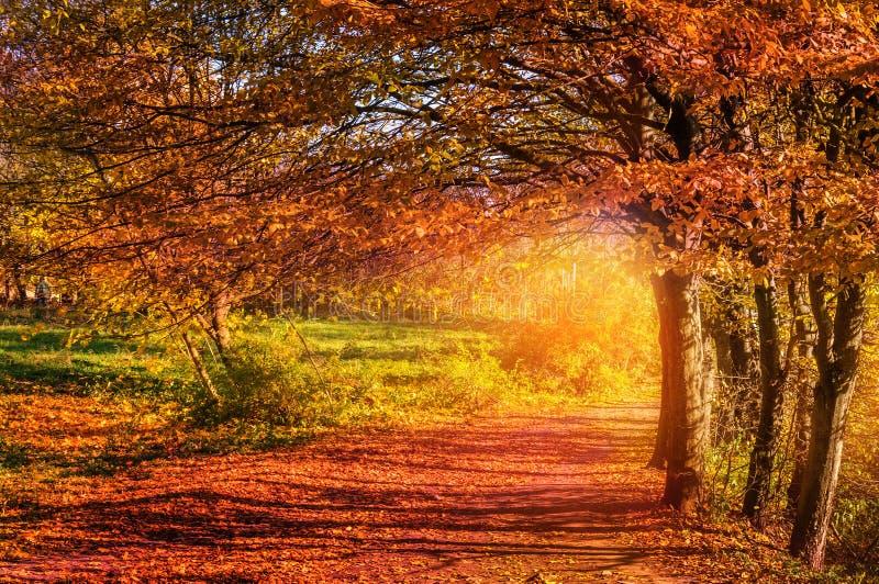 Horizontal coloré d'automne vue pittoresque merveilleuse images libres de droits