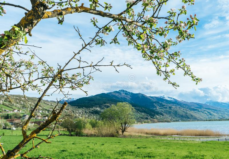 horizontal color image of a lake surrounded by blooming trees on a sunny day. Montenegro mountains. Green garden royalty free stock photo