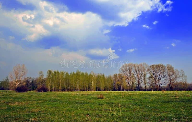 Horizontal d'été photo libre de droits
