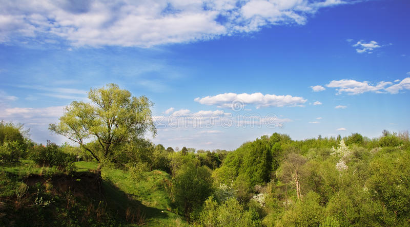 Horizontal d'été photo stock