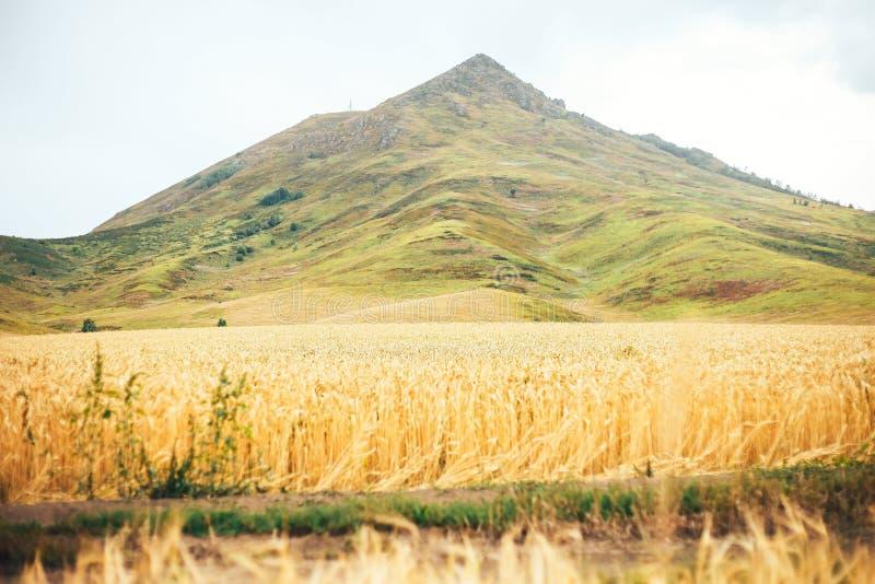 Horizontal d'été avec la zone et les nuages de blé photos libres de droits