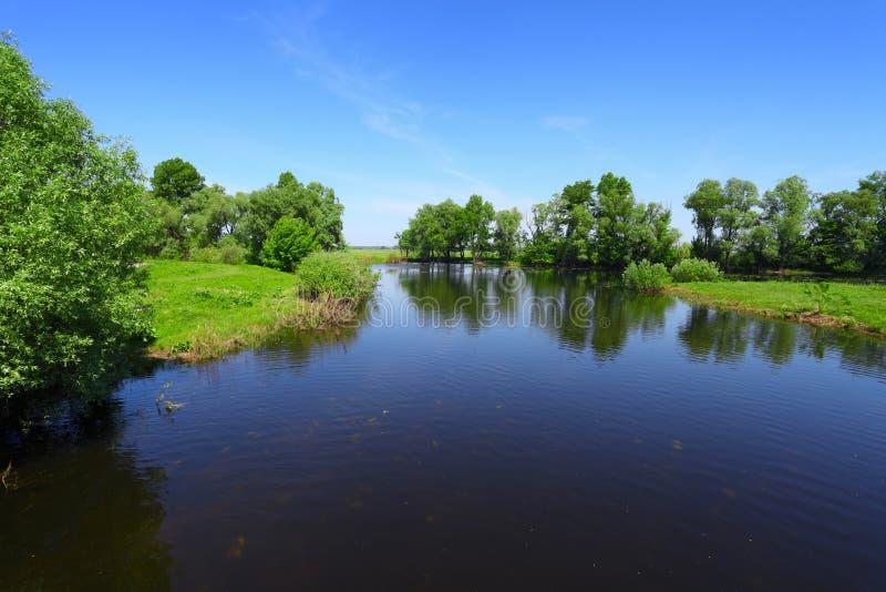 Horizontal d'été avec le fleuve et les arbres verts images stock