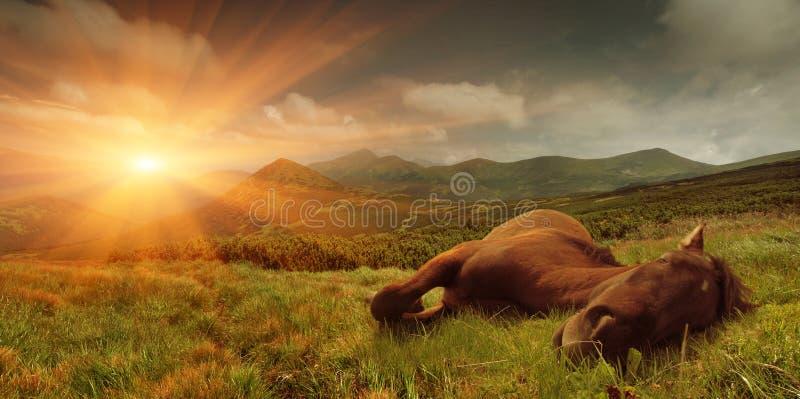 Horizontal d'été avec un cheval de sommeil photo stock