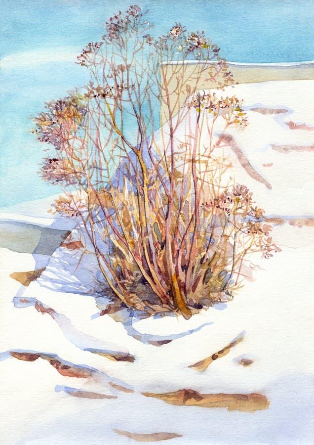 Horizontal d'aquarelle. Vieux buisson en hiver illustration stock