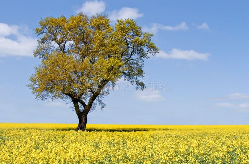 Horizontal d'arbre d'Eco photo libre de droits