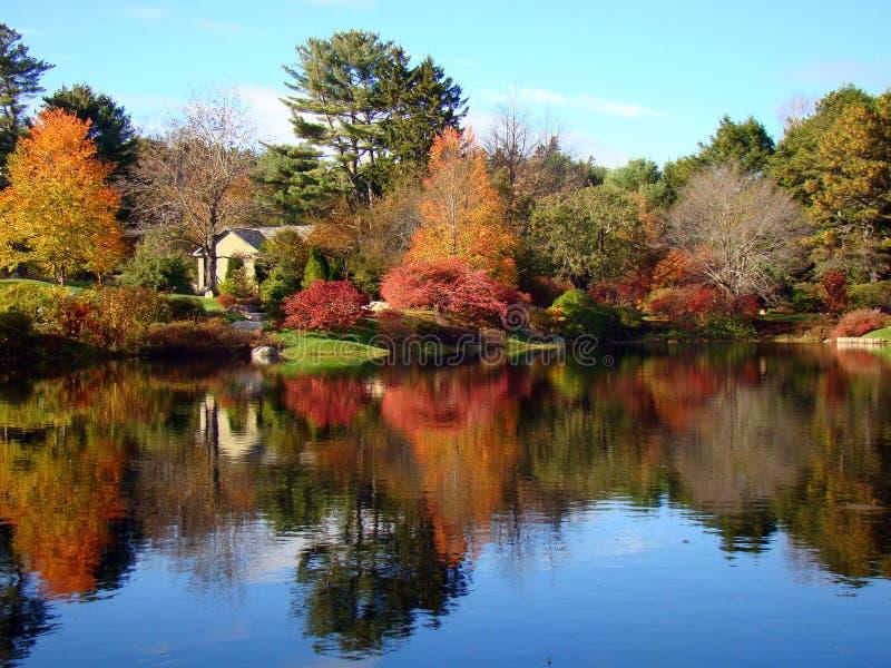 Horizontal d'arbre dans le jardin d'azalée d'Asticou, Maine, USA photographie stock libre de droits