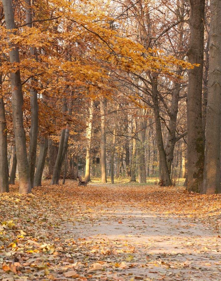 Horizontal d'automne aux nuances du brun photographie stock libre de droits