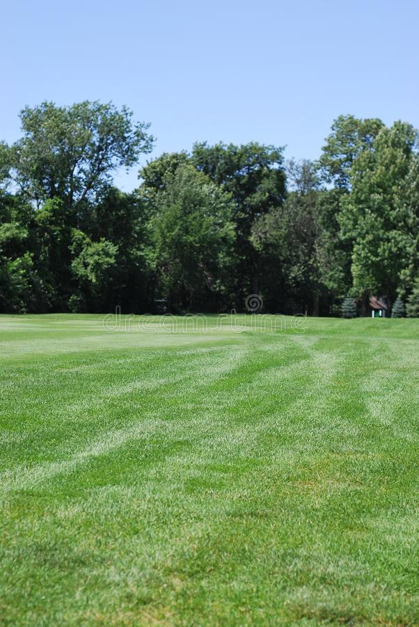 Horizontal d'herbe avec des arbres images stock