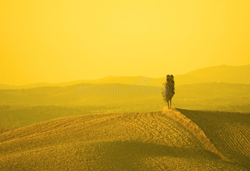 Horizontal dans la lumière jaune de coucher du soleil photographie stock libre de droits
