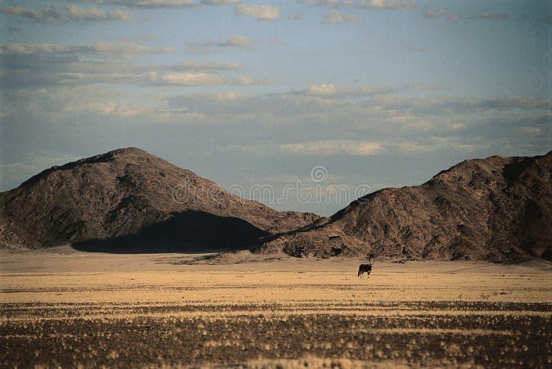 Horizontal de désert de la Namibie photographie stock