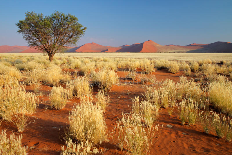 Horizontal de désert, Namibie images stock