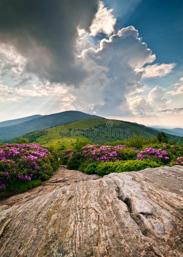 Horizontal de floraison de fleurs de montagnes de Ridge bleu photos libres de droits