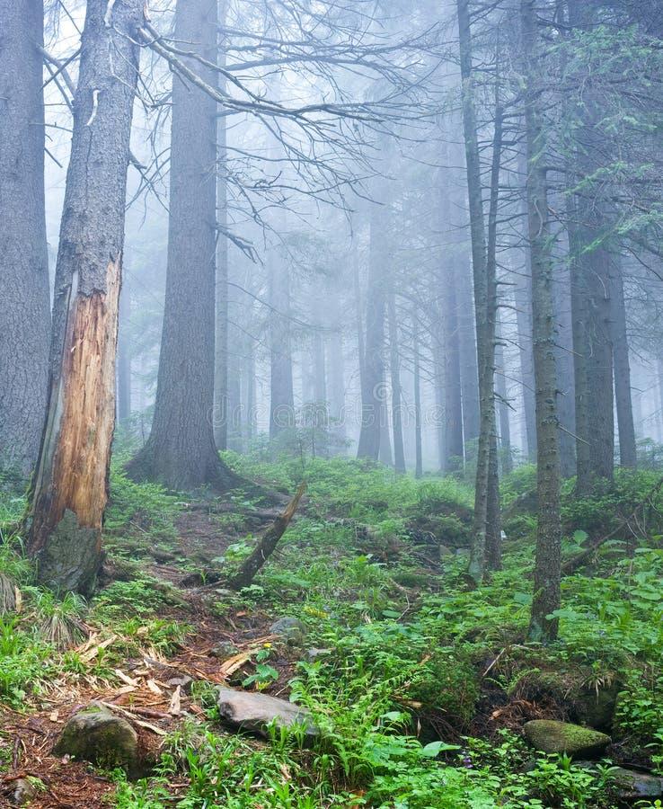 Horizontal de forêt images libres de droits