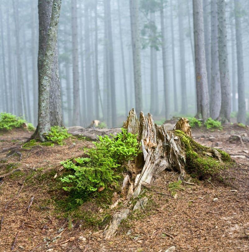 Horizontal de forêt image libre de droits