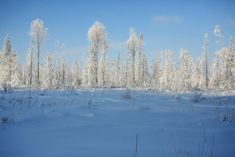 horizontal de forêt de jour ensoleillé photographie stock libre de droits