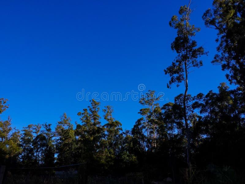 horizontal de forêt de jour ensoleillé images stock