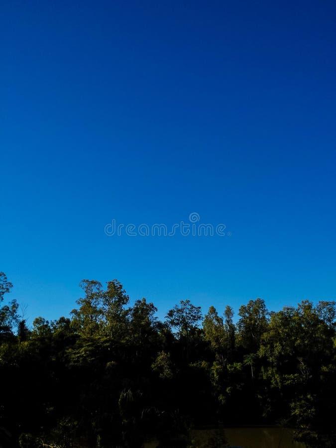 horizontal de forêt de jour ensoleillé image stock