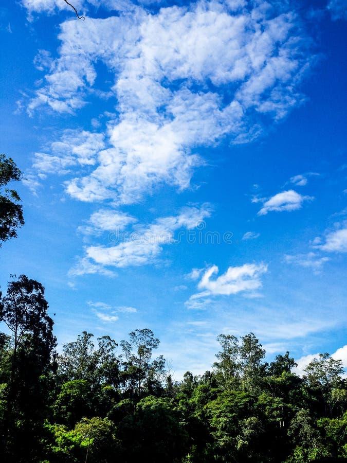 horizontal de forêt de jour ensoleillé images libres de droits
