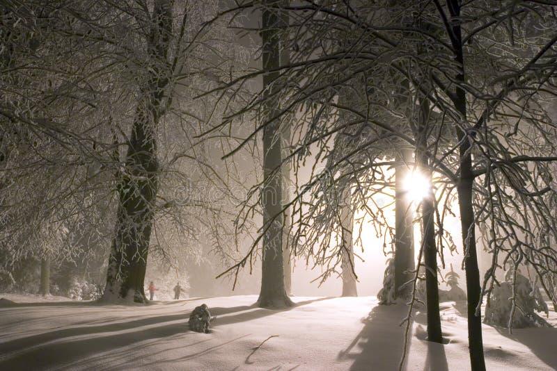 horizontal de forêt de soirée neigeux images libres de droits