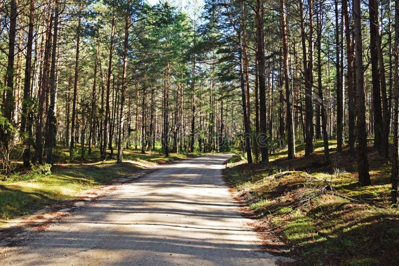horizontal de forêt de jour ensoleillé photos stock