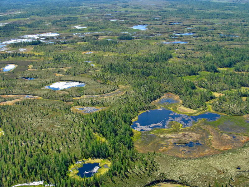 horizontal de Forêt-toundra photos libres de droits