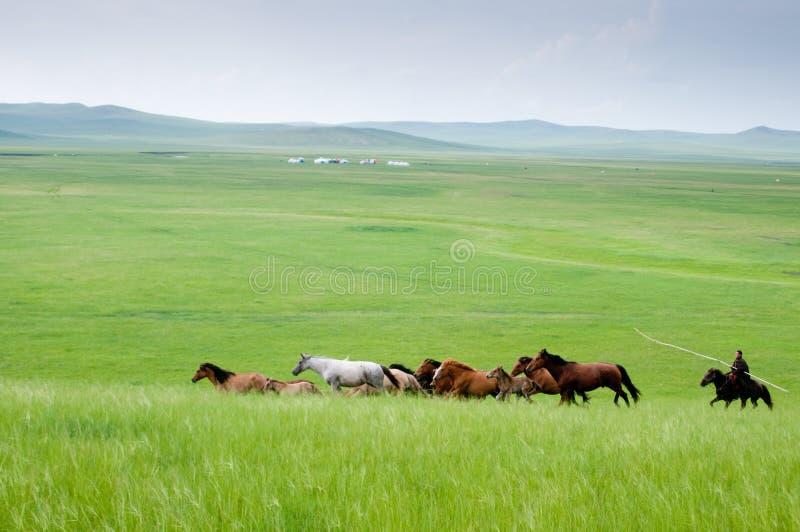 Horizontal de Hulunbeir photo libre de droits