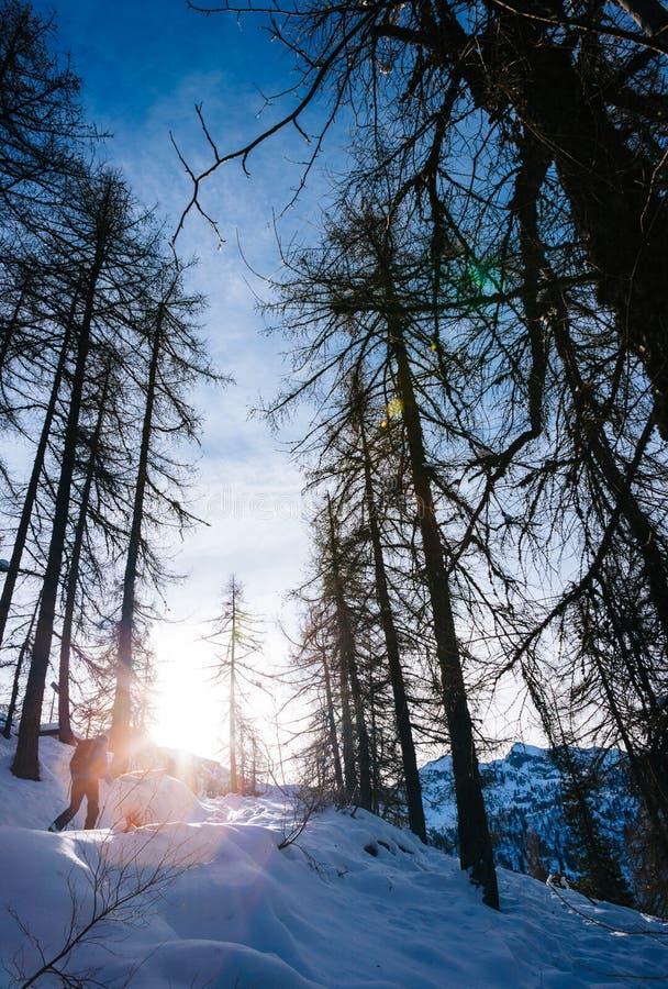 Horizontal de l'hiver Équipez en marchant dans les bois neigeux dans les Alpes italiens photos libres de droits