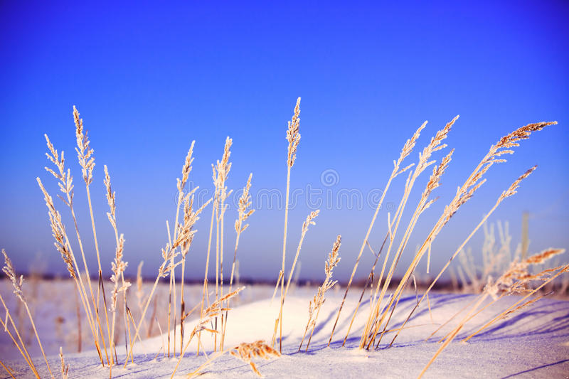 Horizontal De L Hiver Photo stock