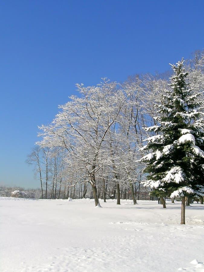 Download Horizontal de l'hiver image stock. Image du lumière, branchement - 45352935