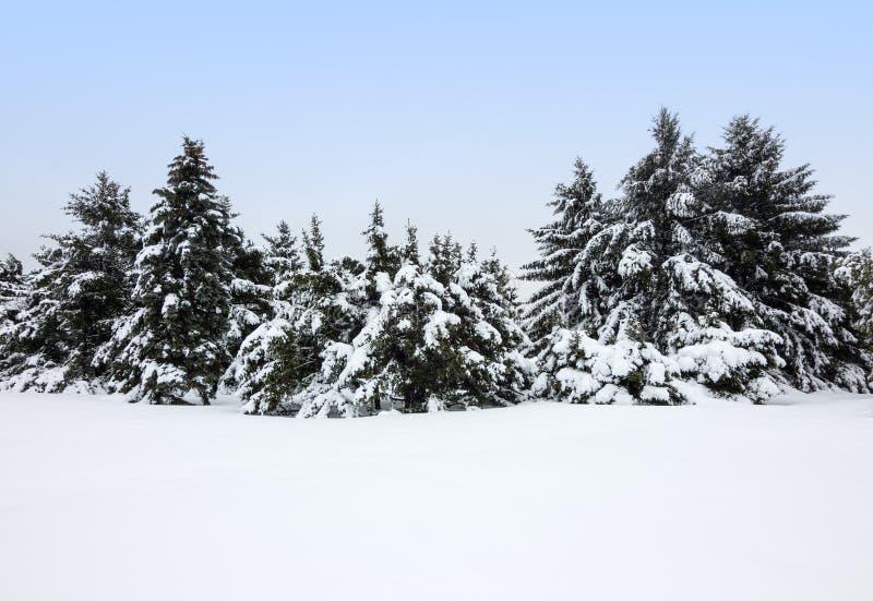 Horizontal de l'hiver après la tempête de neige photo libre de droits