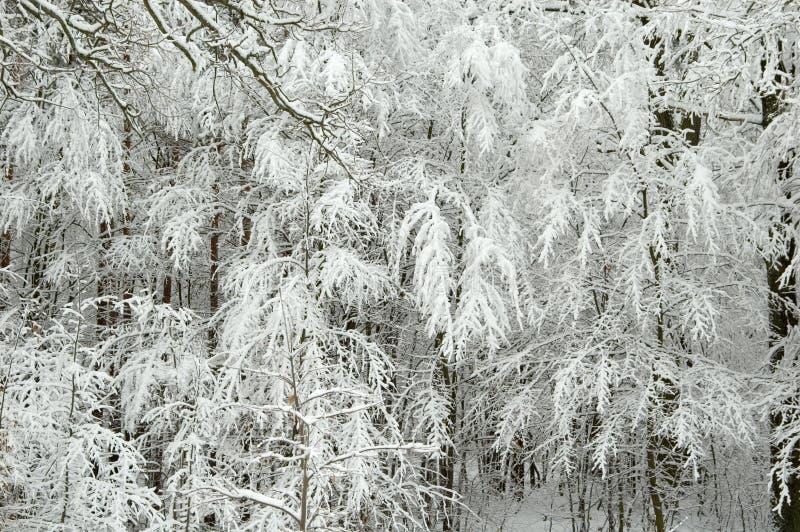 Horizontal de l'hiver après tempête de neige photos libres de droits