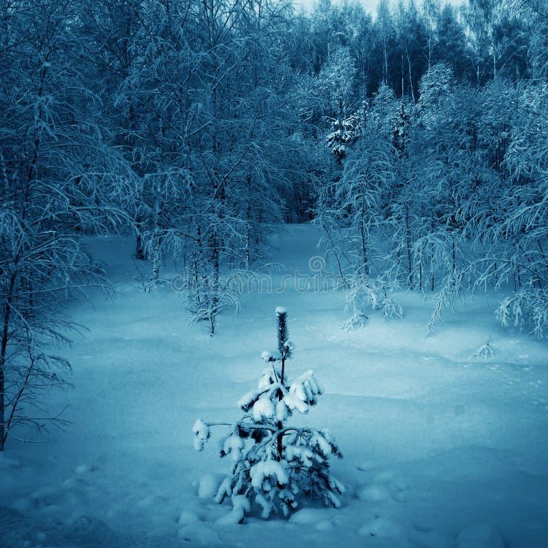 Horizontal de l'hiver avec l'arbre de Noël images stock
