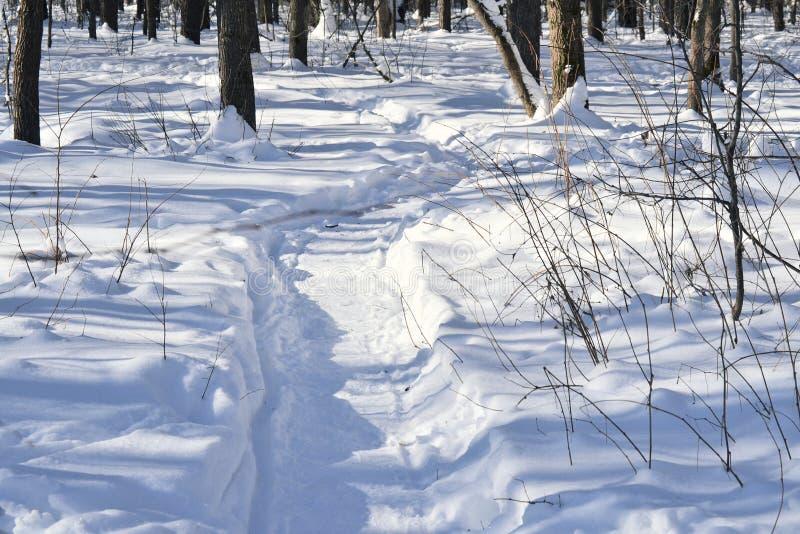 Horizontal de l'hiver Champ d'hiver de Milou et usines congelées Jour ensoleillé Russie photo stock
