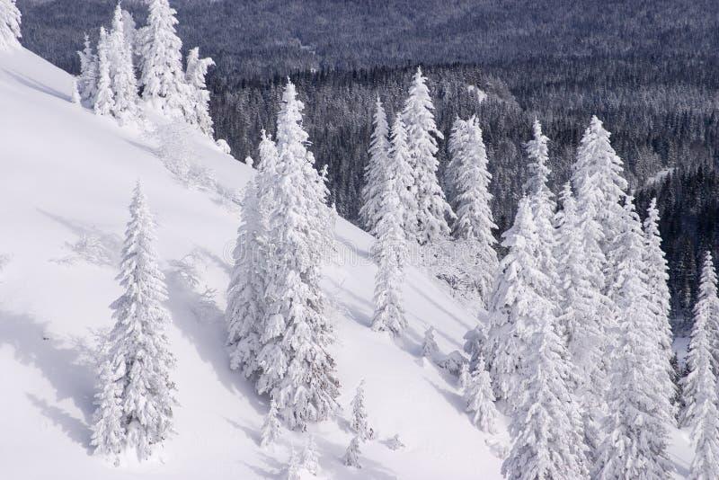 Horizontal de l'hiver de Milou photo libre de droits