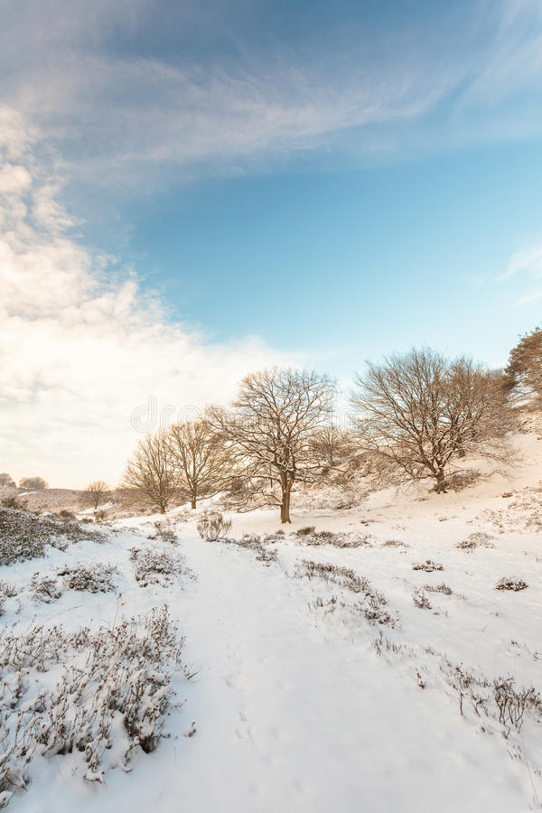 Horizontal de l'hiver en stationnement national hollandais Veluwe image stock