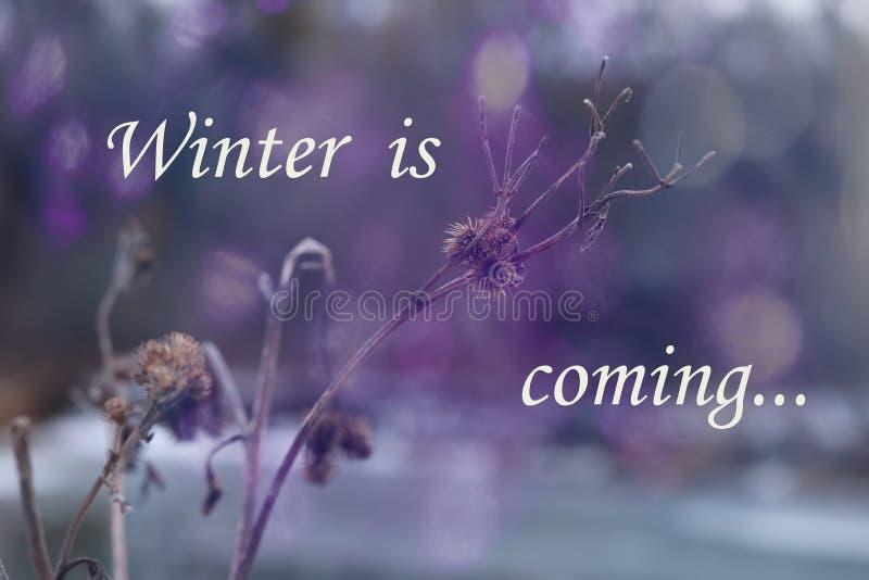 Horizontal de l'hiver L'hiver est prochain concept Fleur de Frozenned, foyer sélectif image stock