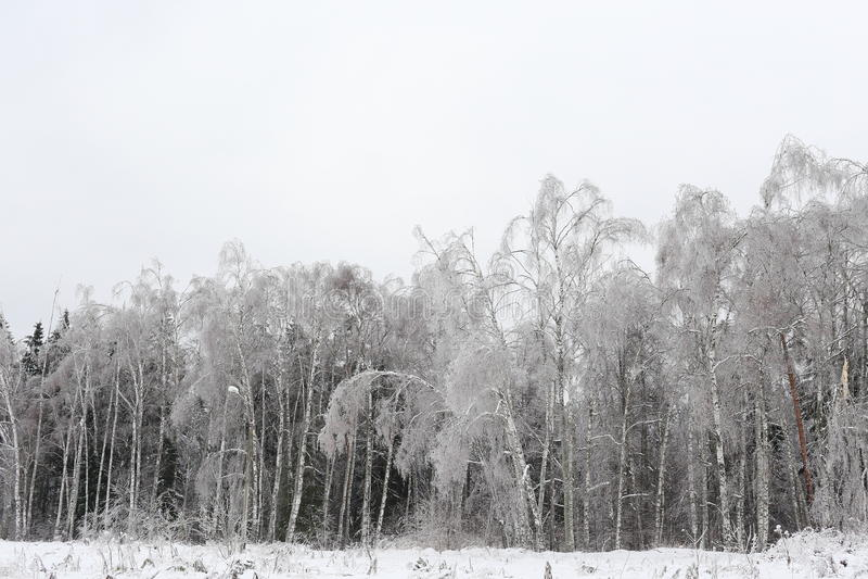 Horizontal de l'hiver Nature russe photo stock